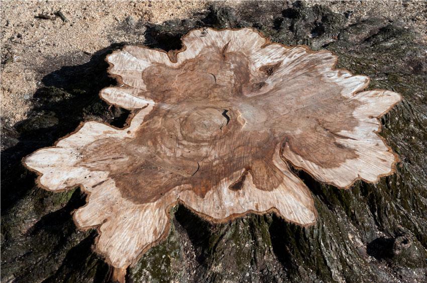 Tree-strump